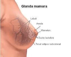 Screening si factori de risc in cancerul mamar